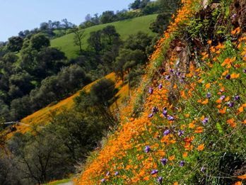 Wildflower Guide: 3 Ways to Find Wildflowers